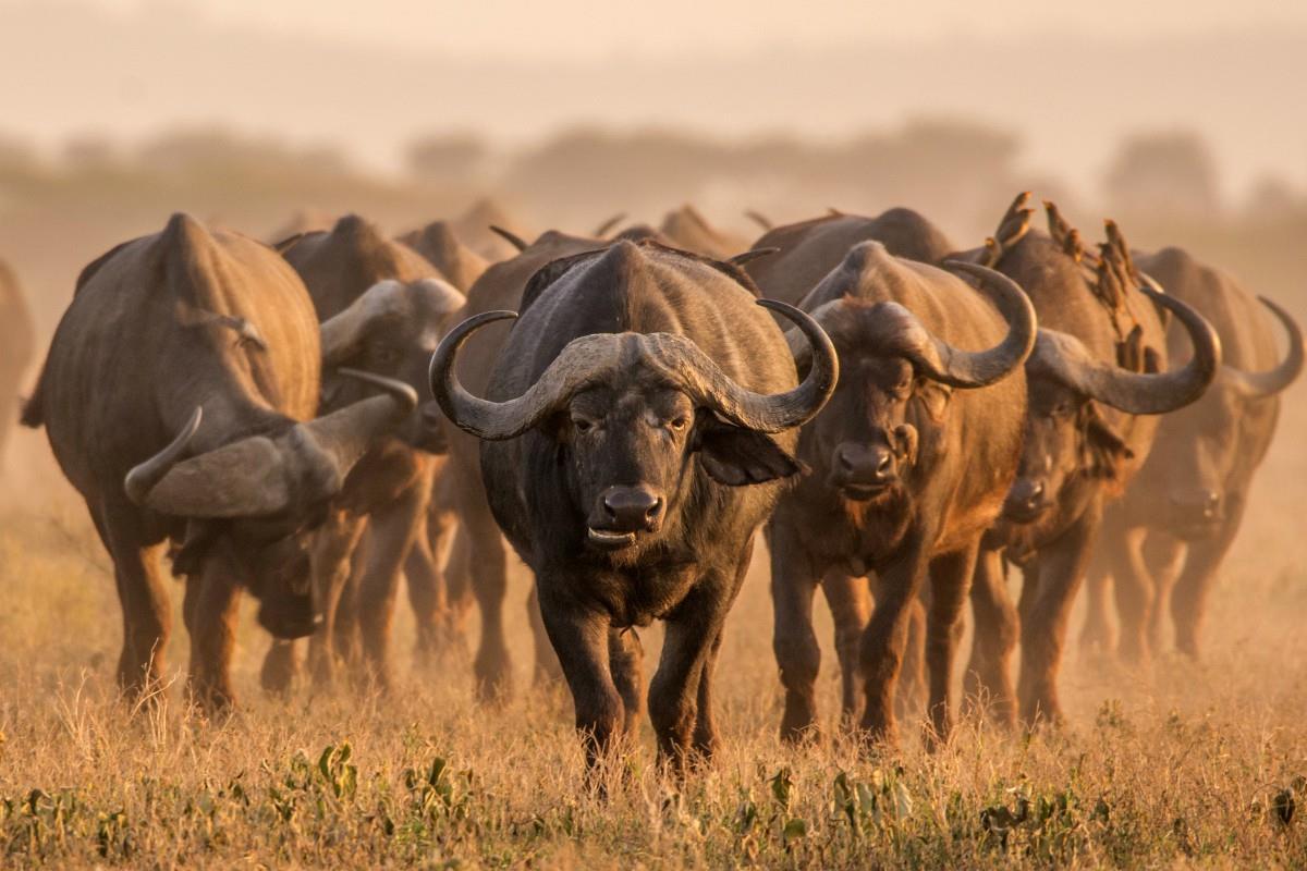 Park Narodowy Ngorongoro