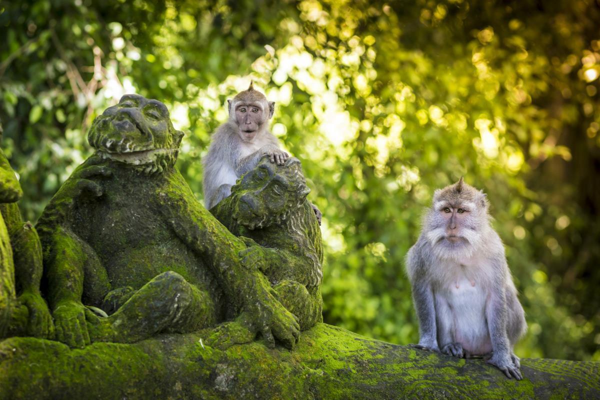Ubud – Małpi Las