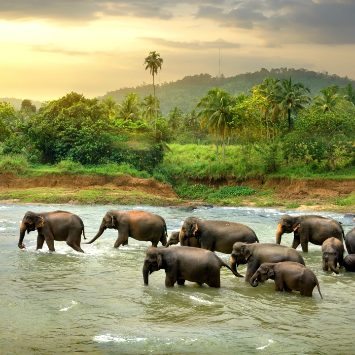 Lamparty i słonie