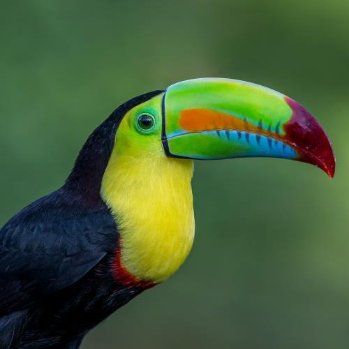 Skarby dziewiczej Kostaryki