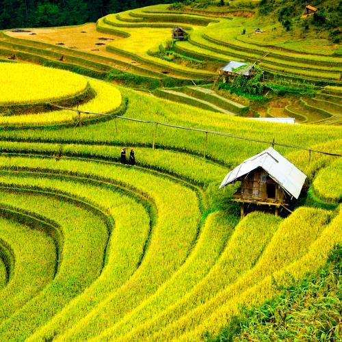 Wietnam i tarasy ryżowe Sapa miniaturka