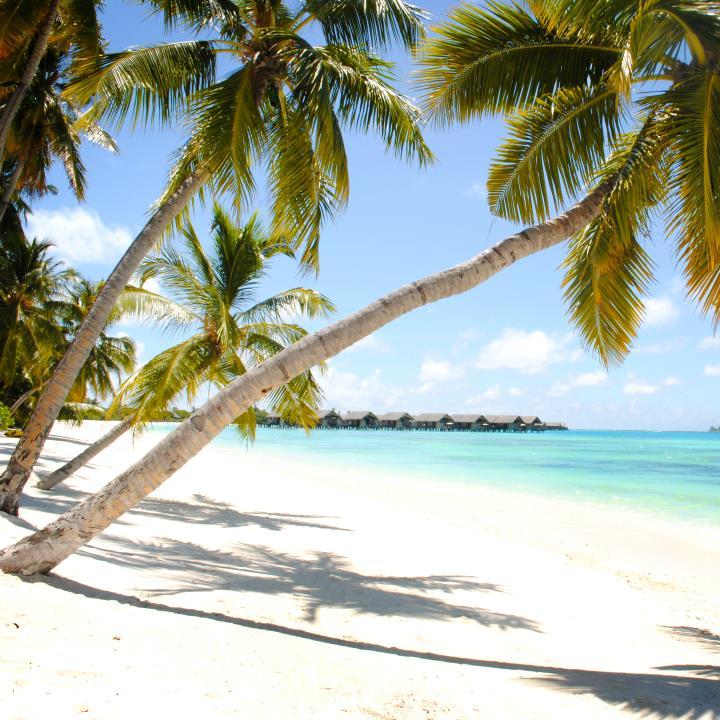 Oaza plaż