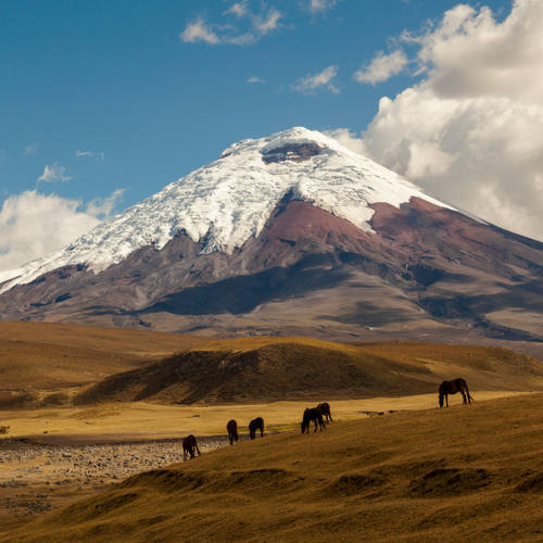 Cotopaxi volcano and wild horses