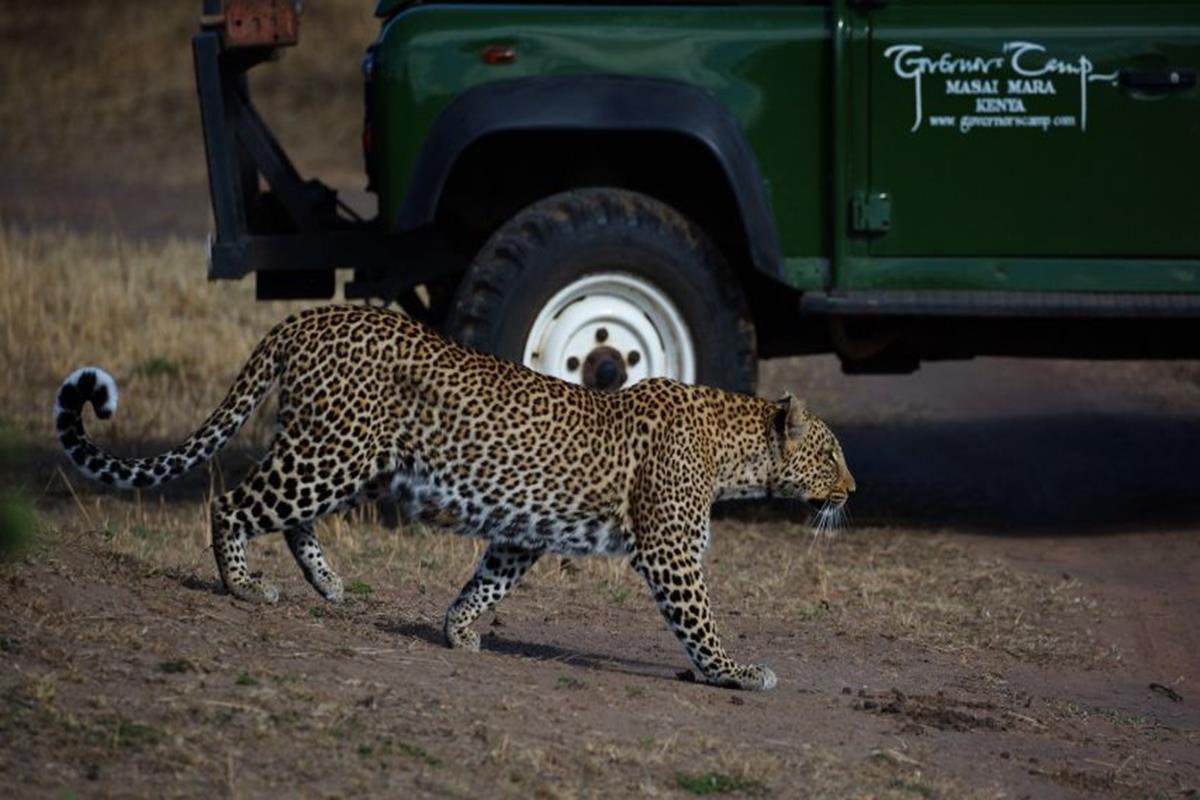 Governors Camp – Safari