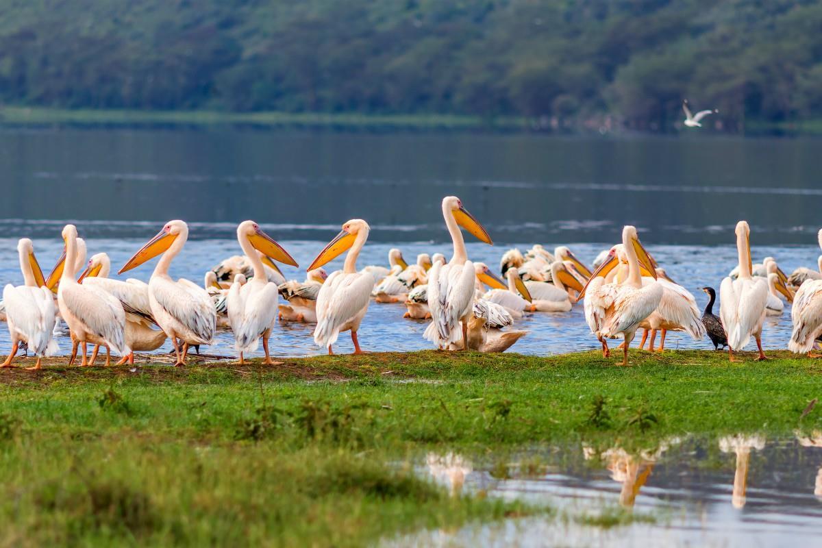 Jezioro Nakuru