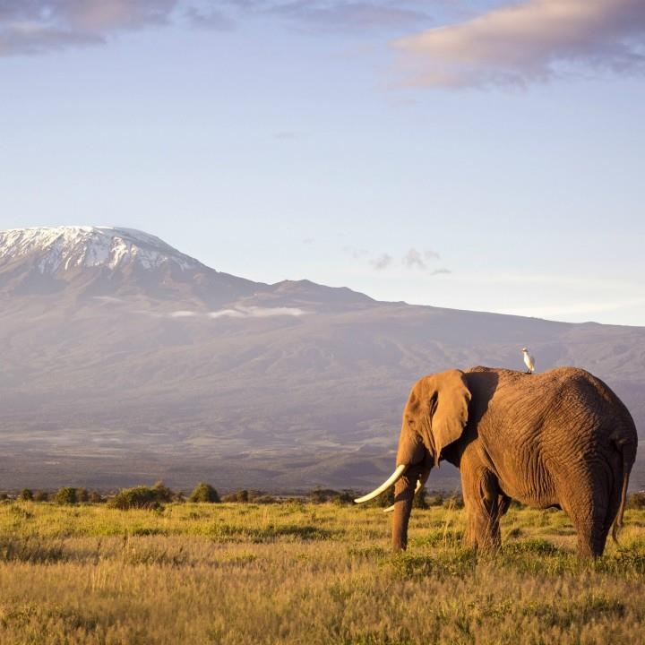 Kilimandżaroo