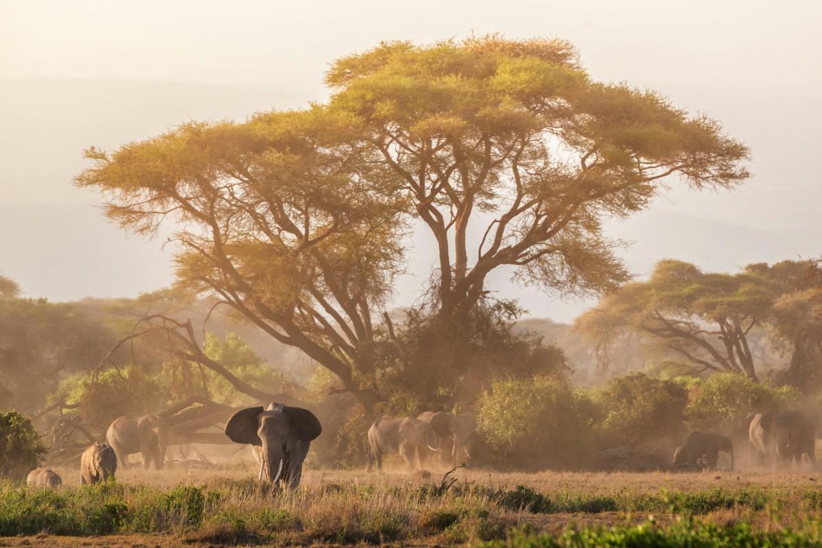Park Narodowy Amboseli