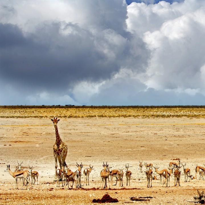 Safari po największych parkach świata
