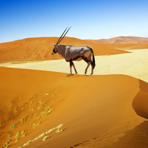 Skarby Namibii – miniaturka