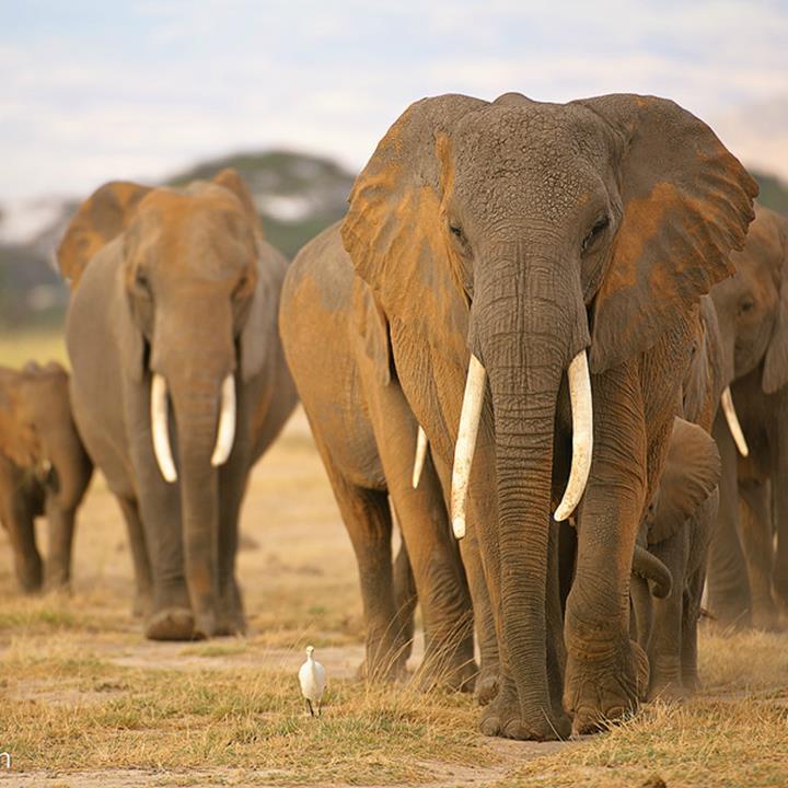 Wielka Piątka Afryki w Kenii