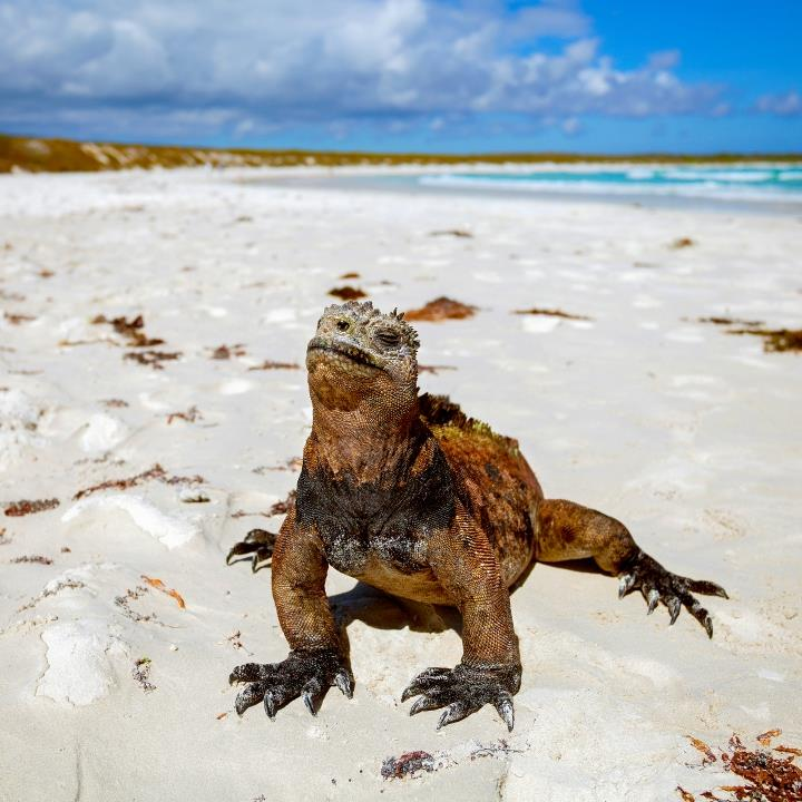 Wyspy Galapagos