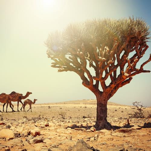 Oman – miniaturka