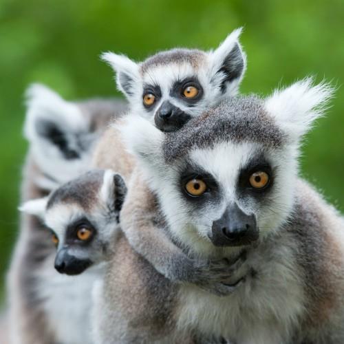 Madagaskar_Tropikalna wyspa na końcu świata_miniaturka