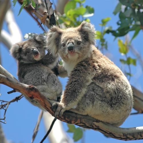 Australia_miniaturka
