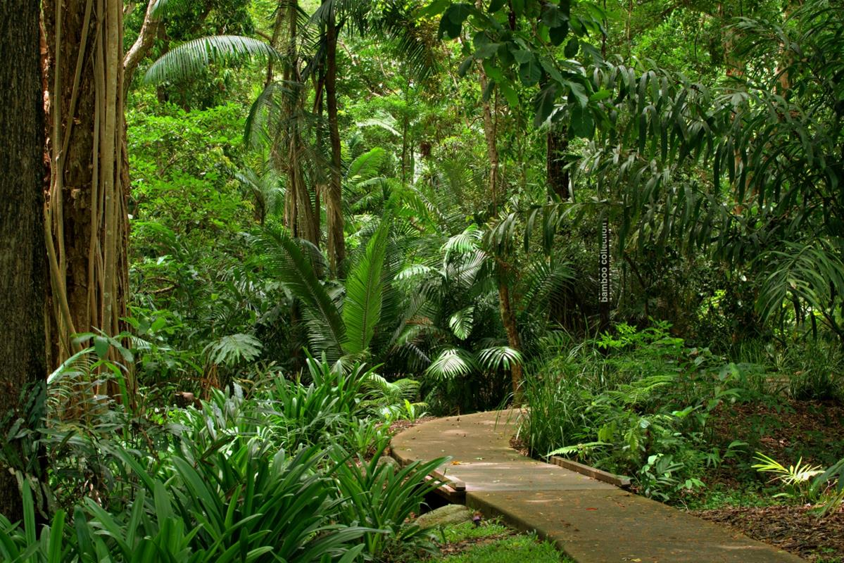 Cairns – Ogród Botaniczny