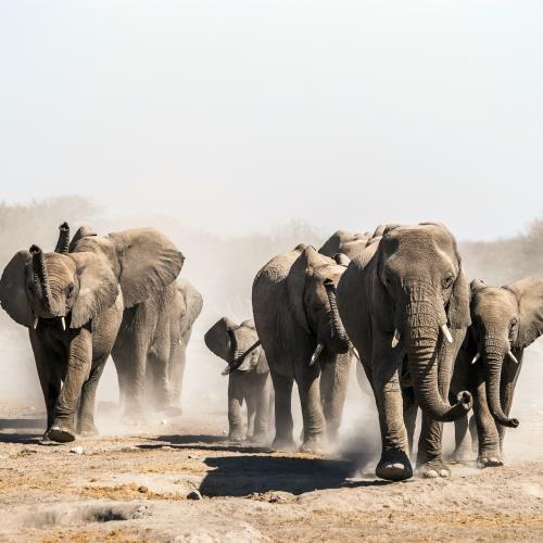 Namibia Exclusive_miniaturka