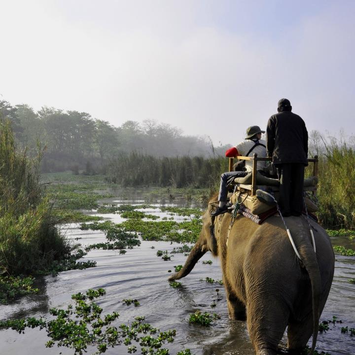 Safari po Parku Narodowym Chitwan