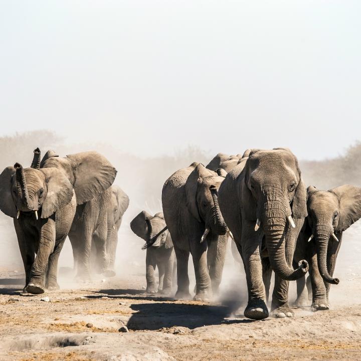 Selfdrive po Namibii