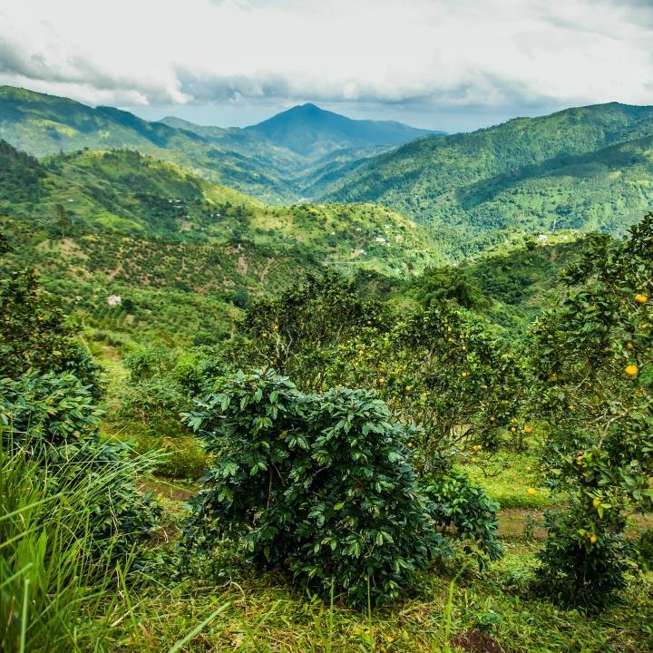 Góry Błękitne na Jamajce