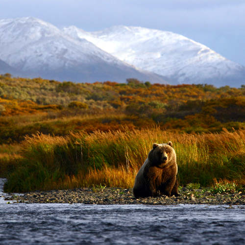 USA – Dzika Alaska_Miniaturka