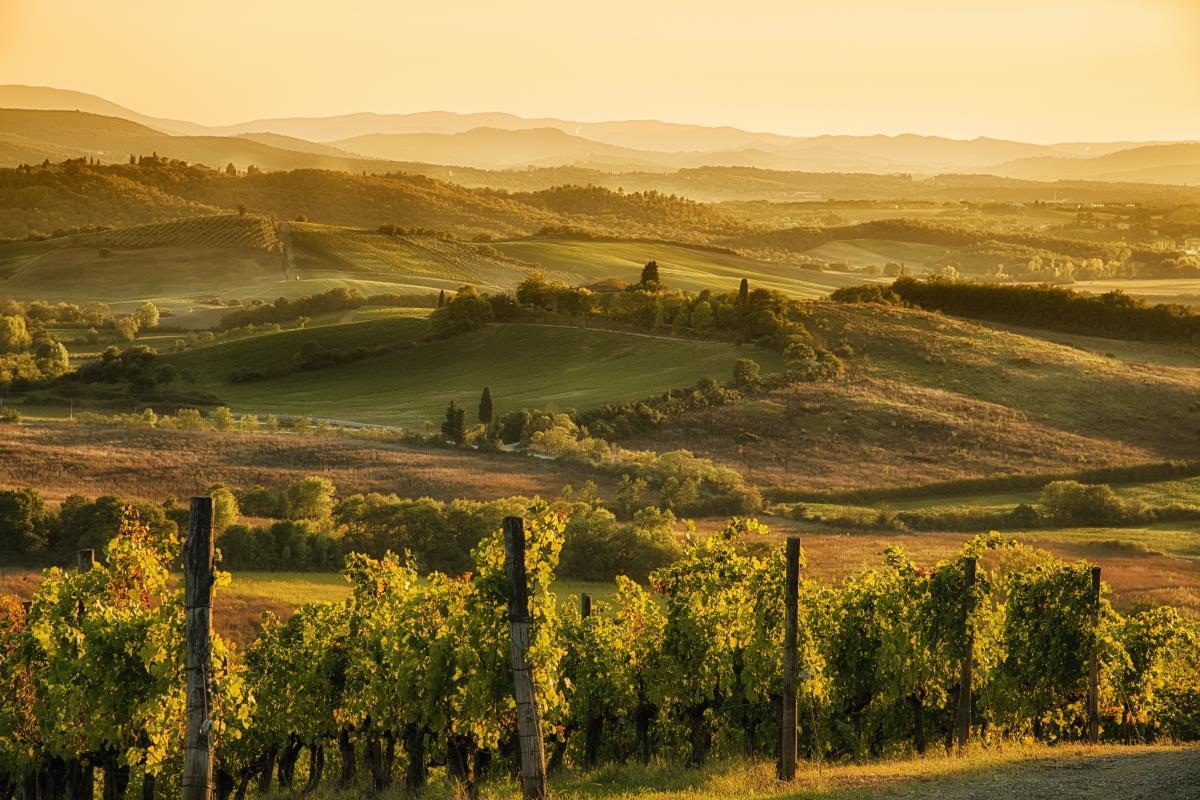 Toskania – Winnice