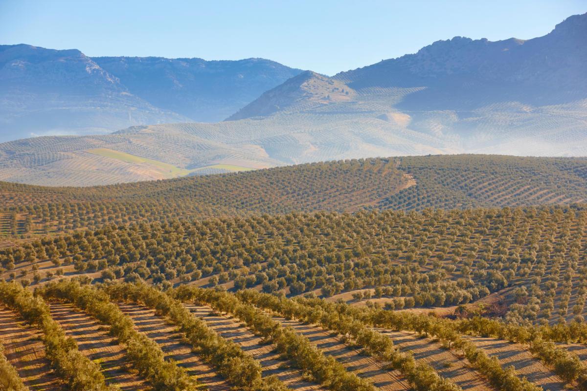 Andaluzja – Gaje oliwne