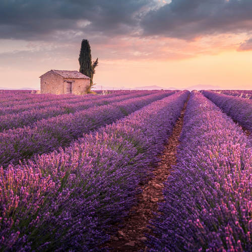Francja_miniatura