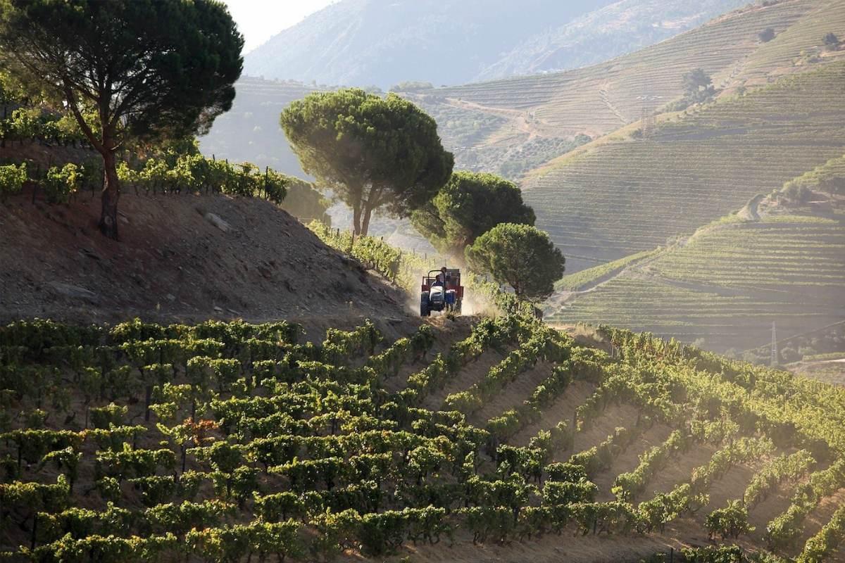 Quinta Nova Luxury Winery House – Winnice