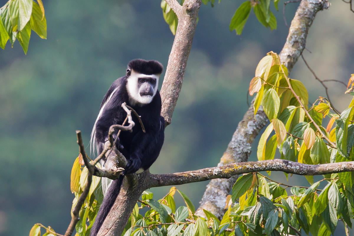 Park Narodowy Bwindi Forest