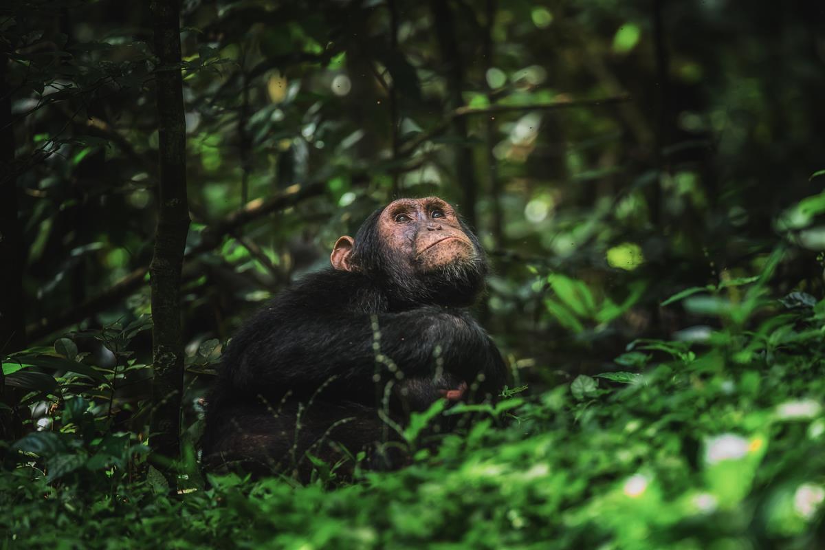 Park Narodowy Kibale