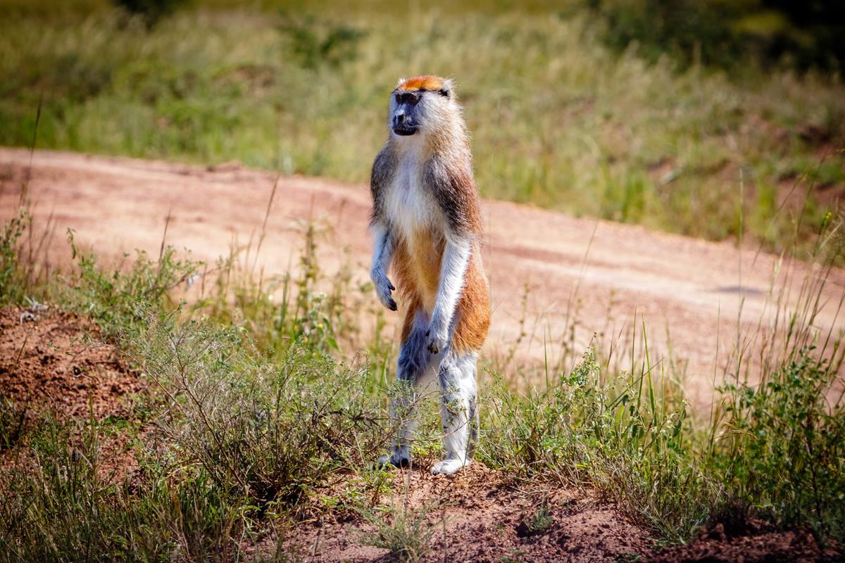 Park Narodowy Murchison Falls