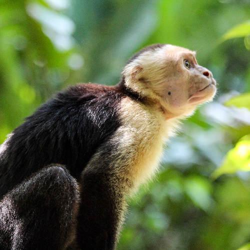Kostaryka Exclusive_Miniaturka