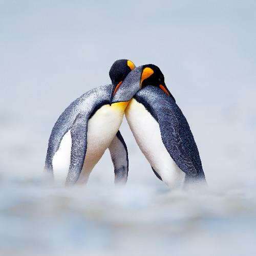Antarktyda_Miniaturka