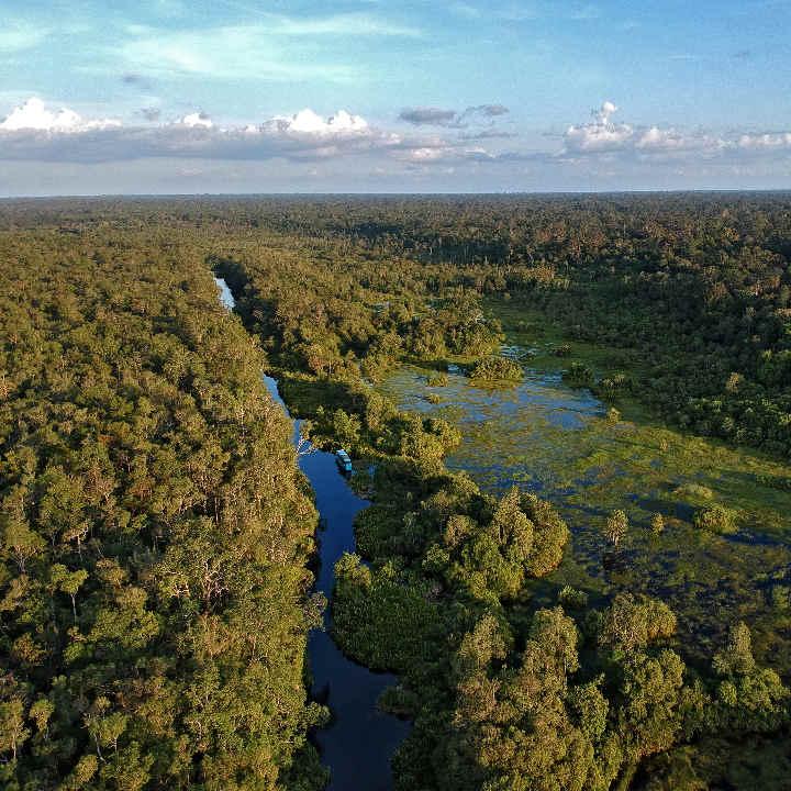 Rejs łodzią po gęstej dżungli Borneo
