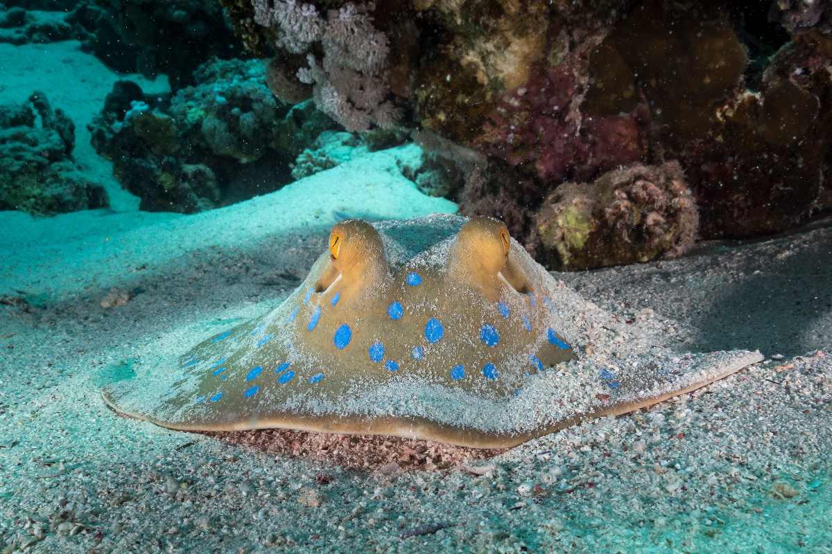 El Quseir – Rafa koralowa