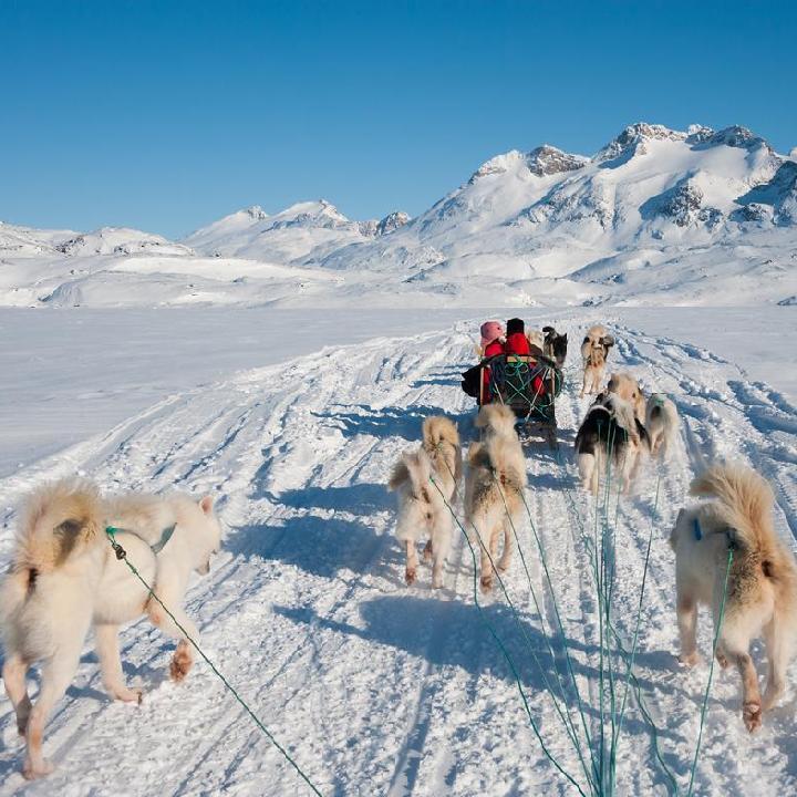 Grenlandia – Psie zaprzęgi