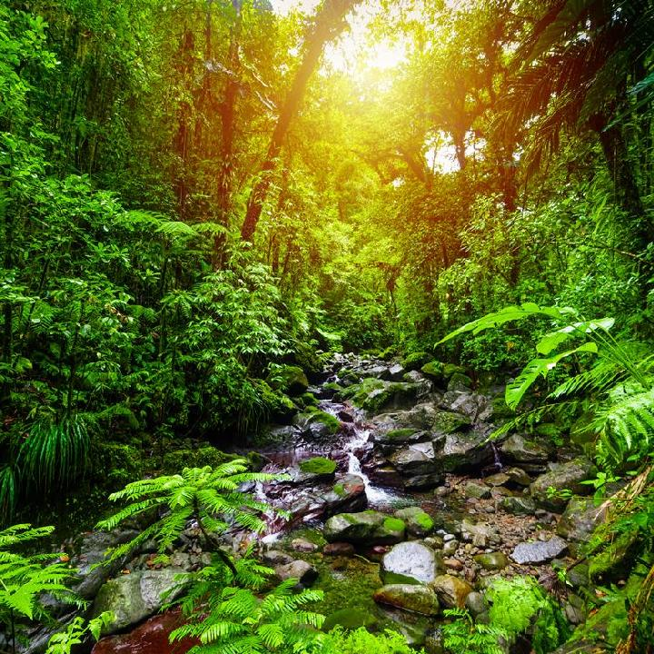 Gwadelupa – park narodowy