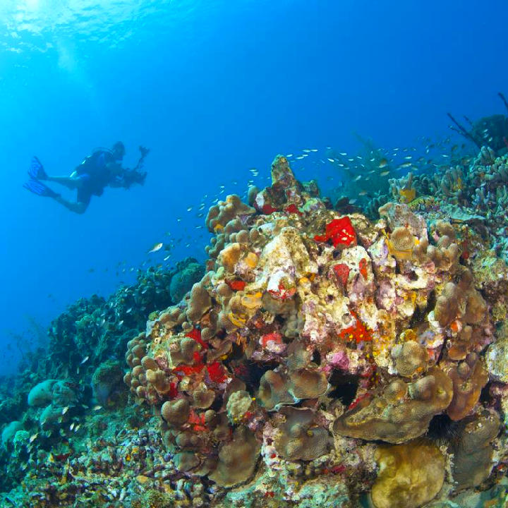 Saint Lucia – nurkowanie