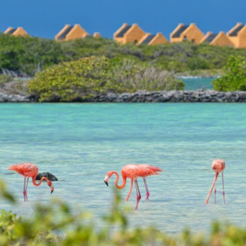 Bonaire_Miniaturka