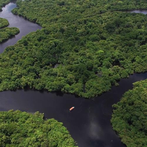 Amazonia – miniaturka