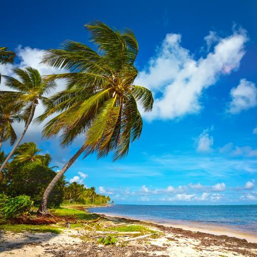 Jamajka miniaturka