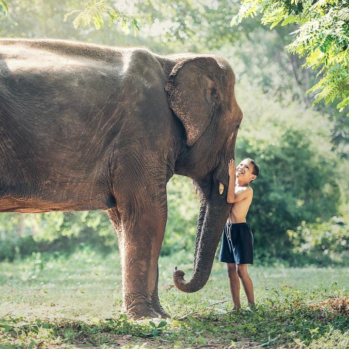 Inspiracje – Kult słonia