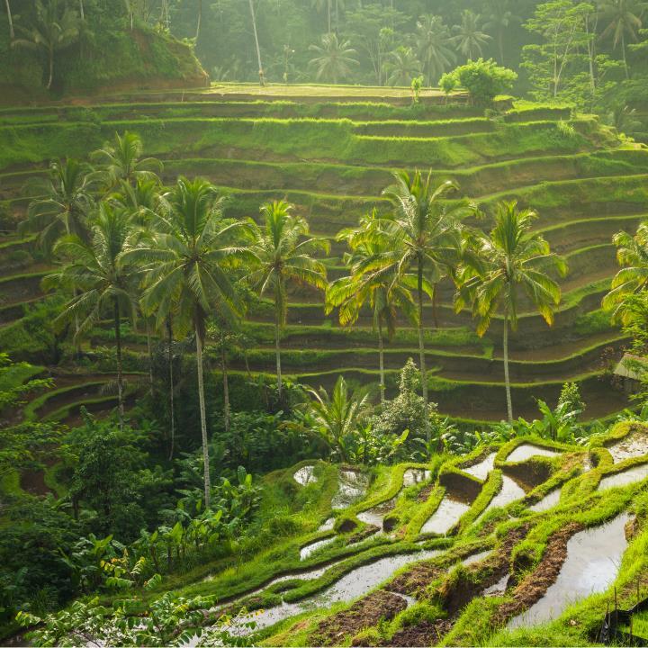 Wśród tarasów ryżowych
