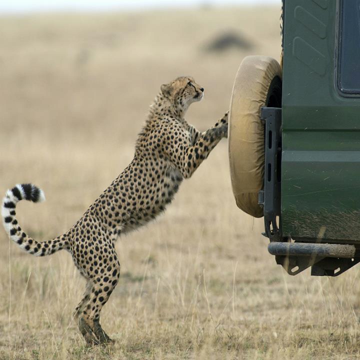 Safari na Masai Mara