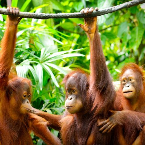 Sumatra i Pulau Weh miniaturka