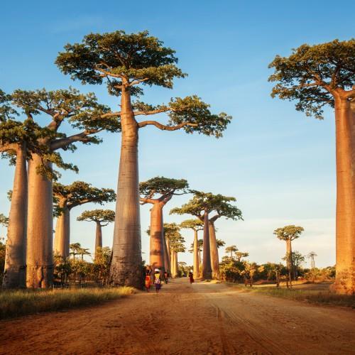 Madagaskar miniaturka