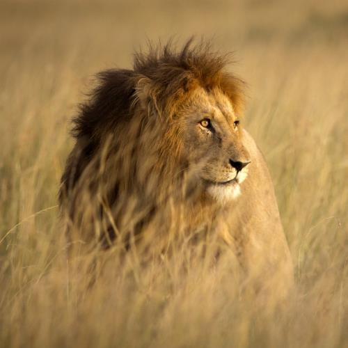 Safari po Parku Krugera i relaks na plażach Mozambiku_miniaturka