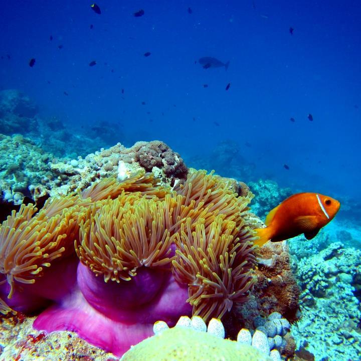 Podwodny świat Mozambiku