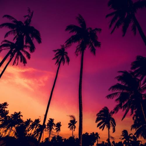 Plaże Miami i roztańczona Jamajka_miniaturka