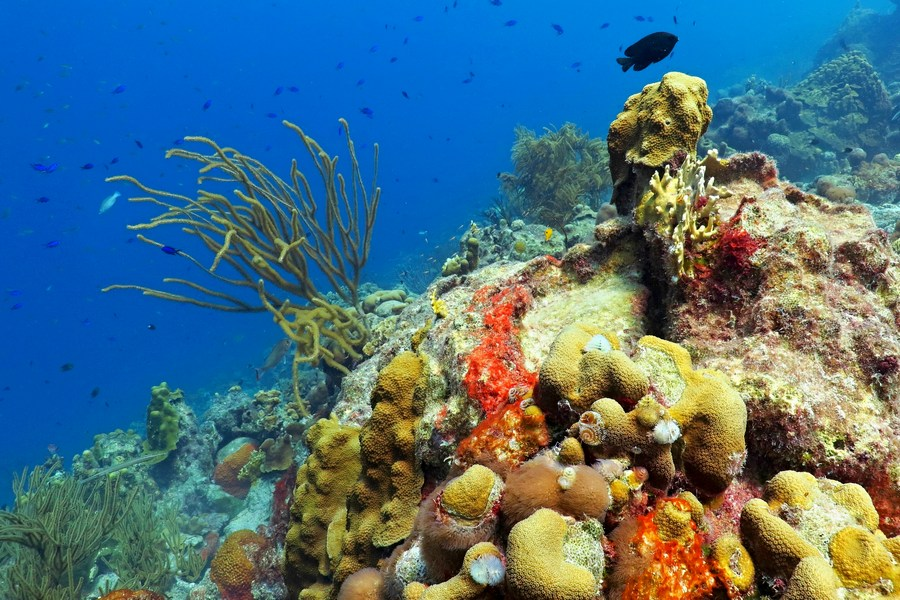 Turks i Caicos - Rafa koralowa